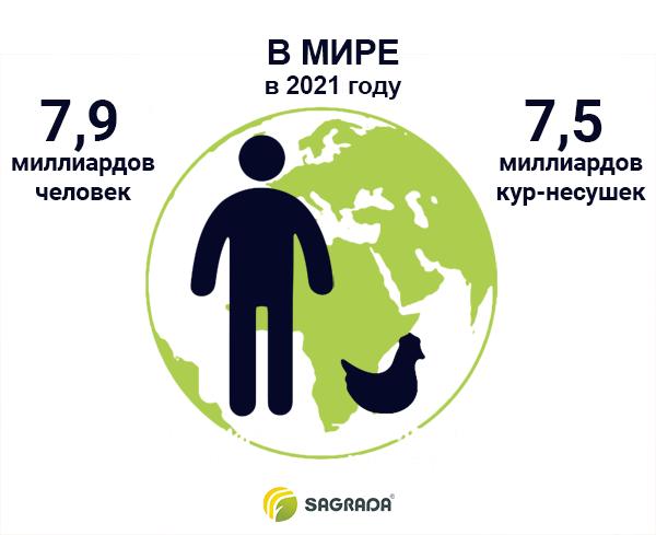 Количество кур-несушек в мире в 2021 году
